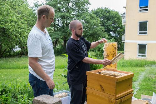 Bienen BKH III